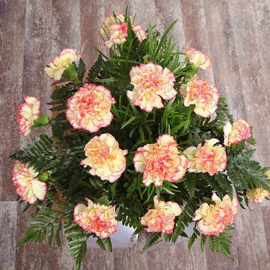 Blumen - Blumenparadies Schulze Bernburg - Foto: Simon Kirchhof